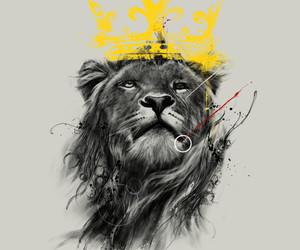 animal, lion, and king image