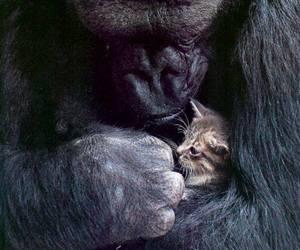 cat, gorilla, and kitten image