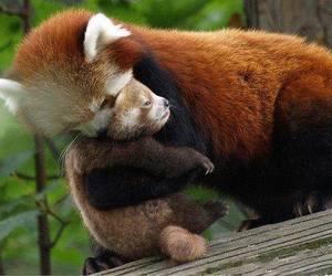 animals, cute, and wildlife image