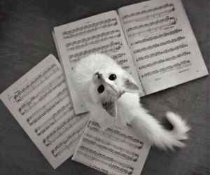 cat, music, and white image