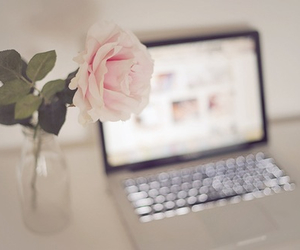 rose, flowers, and laptop image