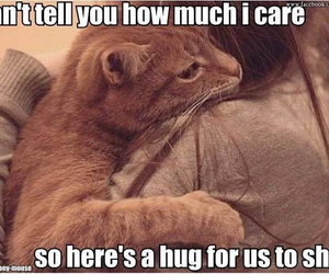 cats, cry, and sweet image