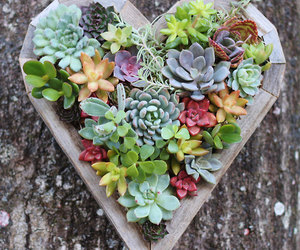 heart, flowers, and plants image