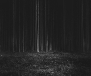 black and white, Darkness, and forest image