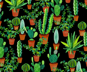 background and cactus image