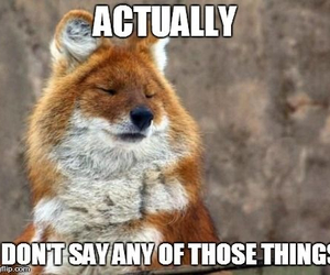 fox, funny, and what does the fox say image