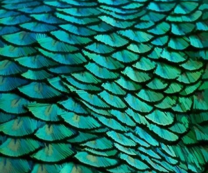 feather, blue, and green image