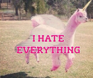 pink, unicorn, and hate image