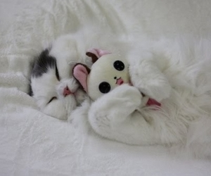 cat, fofo, and kitten image