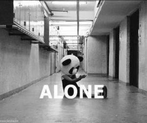 alone, panda, and sad image