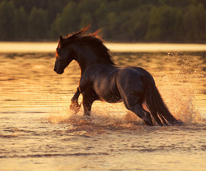 horse, black, and water image