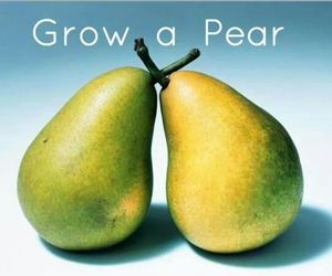 fruit, funny, and sayings image