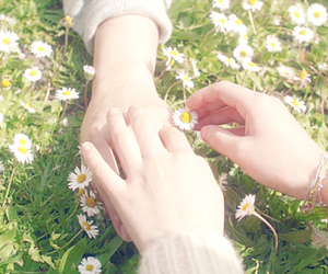 daisies, flowers, and mv image