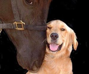 dog, horse, and animal image