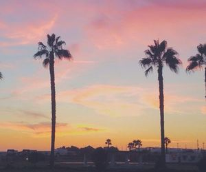 clouds, palm trees, and color image