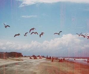 bird, beach, and sky image