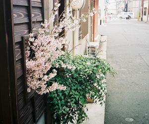 flowers, photography, and street image