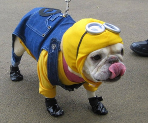 minions and dog image