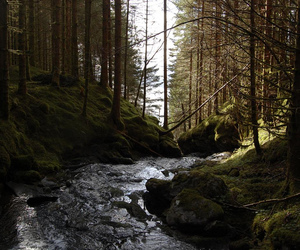 forest and river image