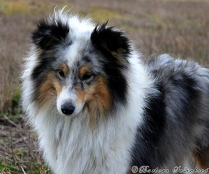 animal, animals, and collie image