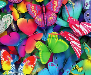 butterfly, wallpaper, and colorful image