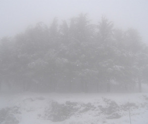 grunge, pale, and snow image