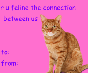 card, love, and cat image