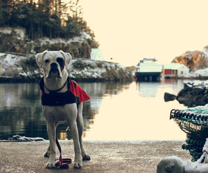 dog, sea, and winter image