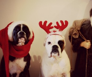 christmas, santa, and dogs image