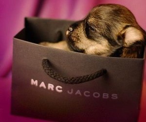 dog, cute, and marc jacobs image