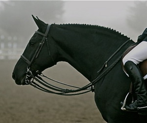 horse, black, and beautiful image