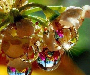 beautiful, drop, and flowers image