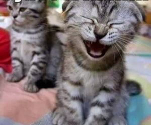 funny, cat, and kitten image