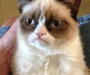 valentines day and grumpy cat image