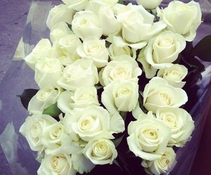 rose, white, and flowers image