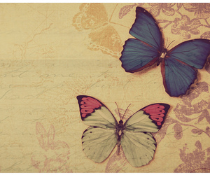 butterfly, text, and texture image