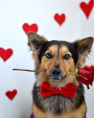 dog, cute, and rose image