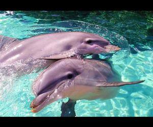 agua, dolphin, and delfin image