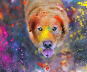 dog, colors, and animal image