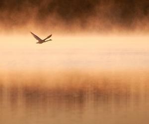 bird, mist, and mood image