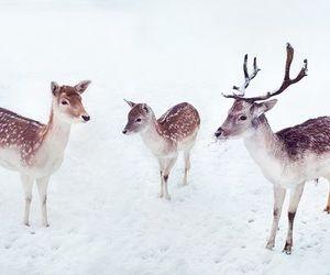 deer and winter image