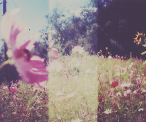 beautiful, flowers, and meadow image