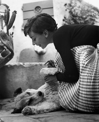 audrey hepburn, dog, and audrey image