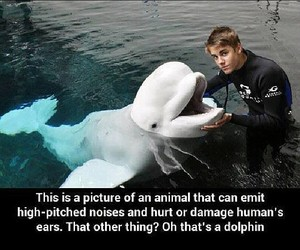 delfin and funny image