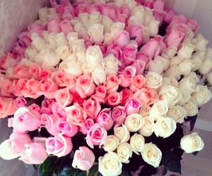beautiful, flowers, and valentine image