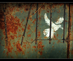 peace and dove image