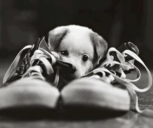 black and white, puppy, and shoes image