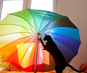 cats, colorful, and umbrella image