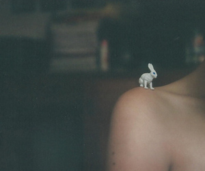 rabbit, photography, and bunny image