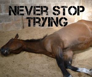 never stop trinh image